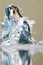 Preview iPhone wallpaper Kingfisher out from water