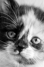 Preview iPhone wallpaper Kitten face close-up, white and black