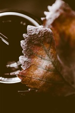 Preview iPhone wallpaper Leaf, lens