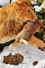 Preview iPhone wallpaper Lion catch a rabbit
