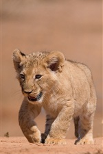 Preview iPhone wallpaper Lion cub walk