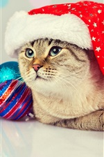 Preview iPhone wallpaper Lovely cat, Christmas balls, hat