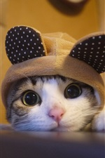 Lovely kitten look at you, hat, humor