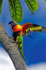 Preview iPhone wallpaper Multicolor parrot, tree, blue sky