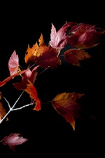 Preview iPhone wallpaper Night, twigs, red maple leaves, black background