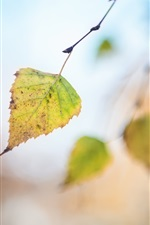 Preview iPhone wallpaper One leaf, autumn, bokeh