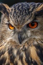 Owl front view, eyes, black background