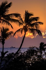Preview iPhone wallpaper Palm trees, sea, clouds, sunset