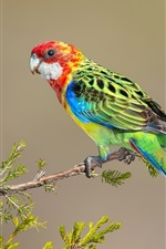 Preview iPhone wallpaper Parrot, colorful feathers, twigs
