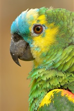 Preview iPhone wallpaper Parrot portrait, green feathers