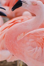Preview iPhone wallpaper Pink feather flamingo