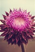 Preview iPhone wallpaper Pink flower, petals, bokeh