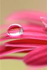 Pink flower petals macro photography, dew