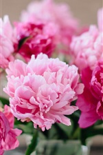 Preview iPhone wallpaper Pink flowers, peonies close-up