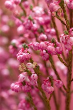 Preview iPhone wallpaper Pink little flowers, twigs, blurry background