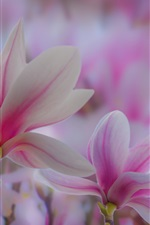 Preview iPhone wallpaper Pink magnolia flowers, spring