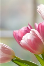 Preview iPhone wallpaper Pink white petals tulips close-up