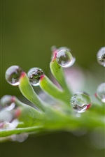 Preview iPhone wallpaper Plants, water drops