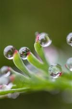 Plants, water drops