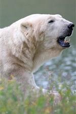 Preview iPhone wallpaper Polar bear rest, side view, grass