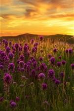Preview iPhone wallpaper Purple flowers field, grass, sunset
