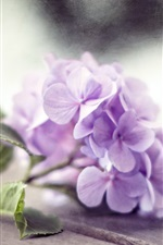 Preview iPhone wallpaper Purple hydrangea flowers, wood board