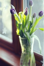 Purple tulips, vase, window