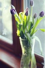 Фиолетовые тюльпаны, ваза, окно