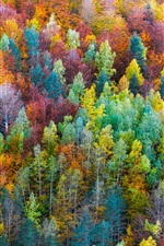 Preview iPhone wallpaper Rainbow color forest