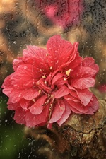 Preview iPhone wallpaper Red flower, rain