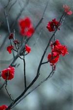 iPhone壁紙のプレビュー 赤い梅の花、小枝、ぼやけた背景
