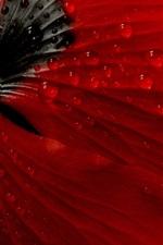 미리보기 iPhone 배경 화면 빨간 양 귀 비 꽃 다시보기, 듀