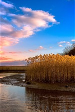 Preview iPhone wallpaper Reeds, river, clouds, sunset