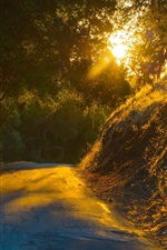 Preview iPhone wallpaper Road, trees, sun rays, morning