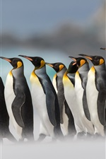 Preview iPhone wallpaper Royal penguins, fog