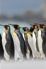 iPhone обои Королевские пингвины, туман