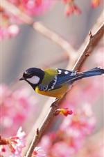 Preview iPhone wallpaper Sakura, bird, spring