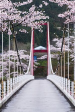 Preview iPhone wallpaper Sakura bloom, flowers, spring, bridge, trees, Japan