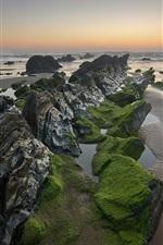Preview iPhone wallpaper Sea, rocks, algae, moss, sunset