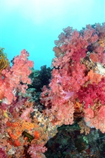 Preview iPhone wallpaper Sea, underwater world, beautiful corals