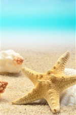 Preview iPhone wallpaper Seashells, starfish, beach, sea
