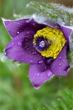 미리보기 iPhone 배경 화면 수면 잔디, 보라색 꽃, 이슬