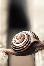 Preview iPhone wallpaper Snail macro photography, wood board