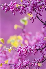 Preview iPhone wallpaper Spring, tree flowers, flowering, purple, twigs