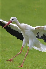 Preview iPhone wallpaper Stork flying, wings, grass