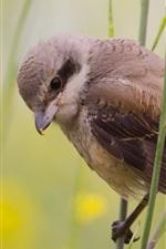 Preview iPhone wallpaper Summer bird, sparrow