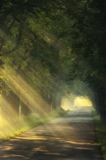 Preview iPhone wallpaper Summer, trees, road, sun rays