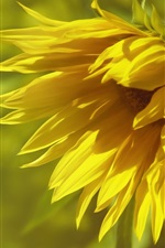 Preview iPhone wallpaper Sunflower close-up, blurry background