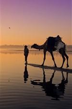 Pôr do sol, rio, camelo