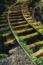 Preview iPhone wallpaper Thickets, rails, moss, forest